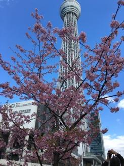 Beautiful blossoms flowering